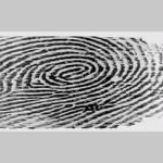 طراحی سیستم تشخیص اثر انگشت به کمک شبکه عصبی در نرم افزار matlab